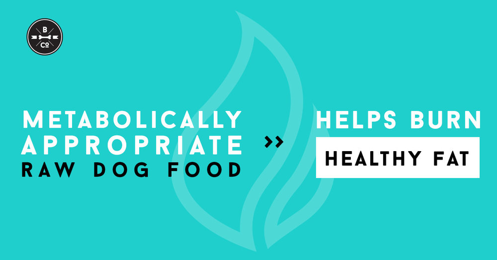 metabolically-appropriate-raw-dog-food