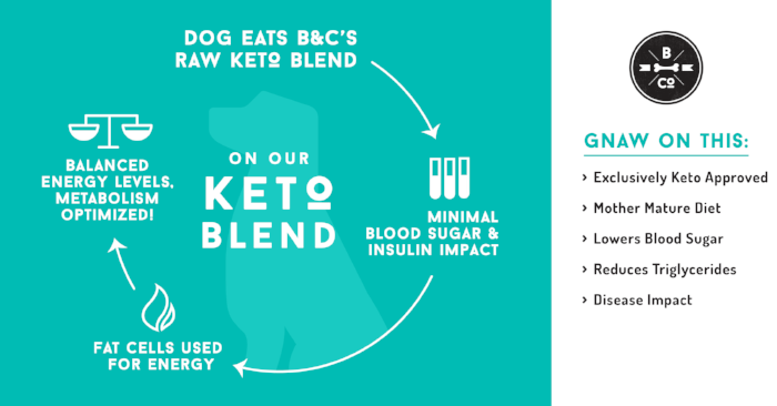 dog-eating-keto-cycle