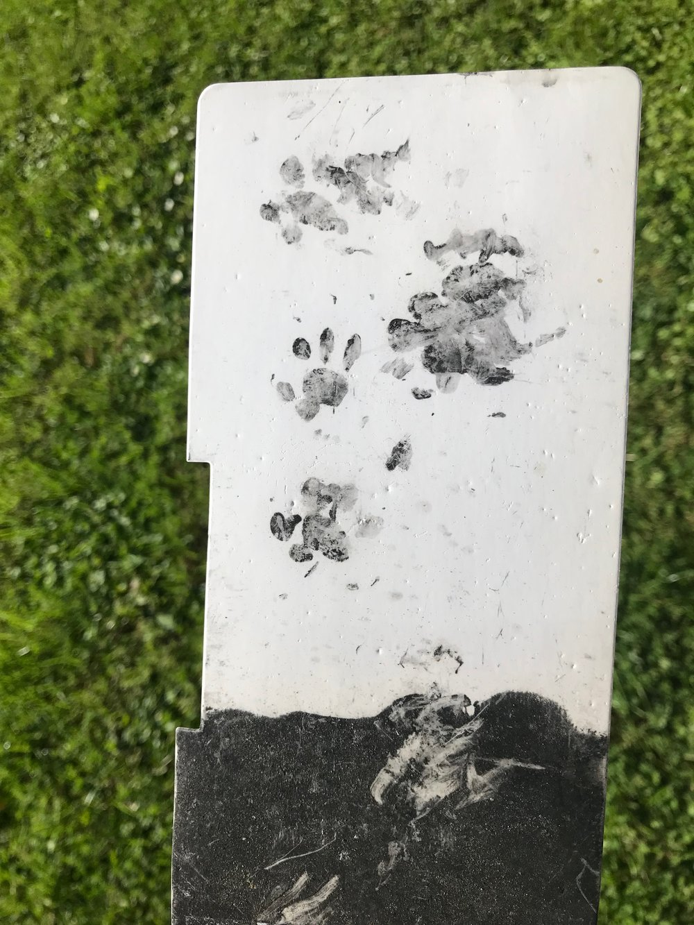 Inky hedgehog footprints.