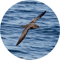 Seabird Habitat Restoration -