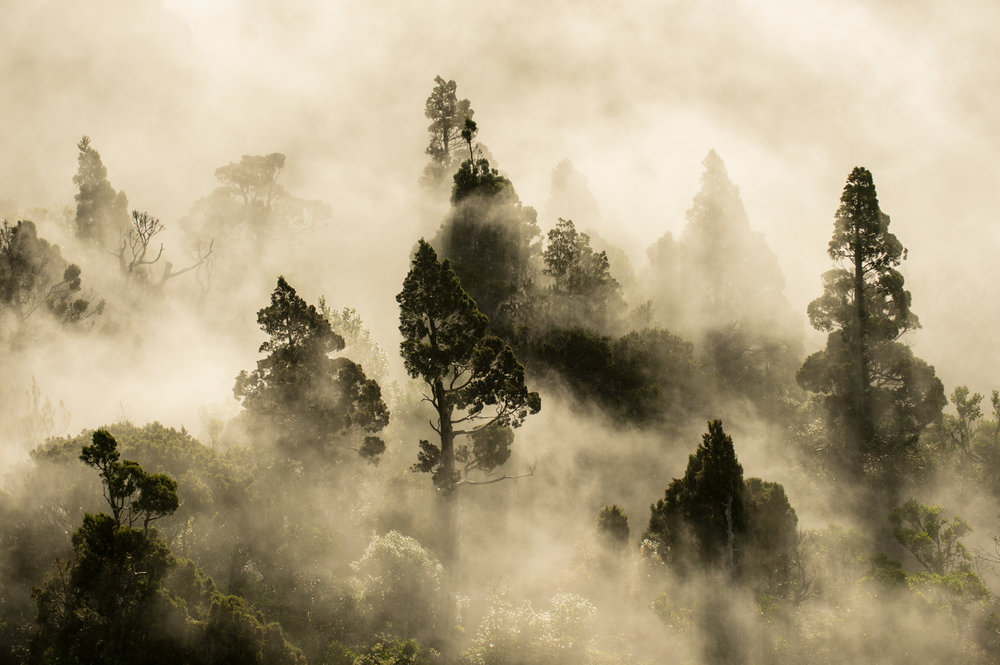 Cloud Forest by Craig McKenzie