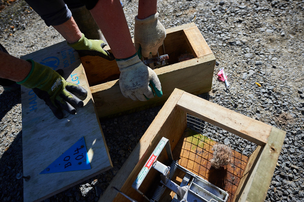 Volunteers cleaning and testing traps