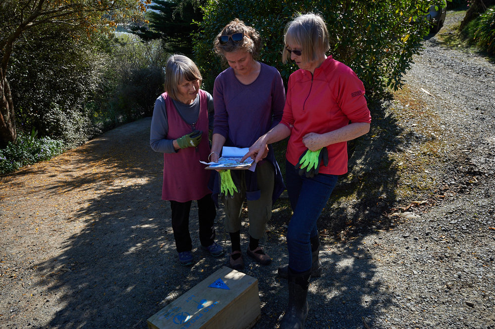Volunteers locating traps to be cleaned