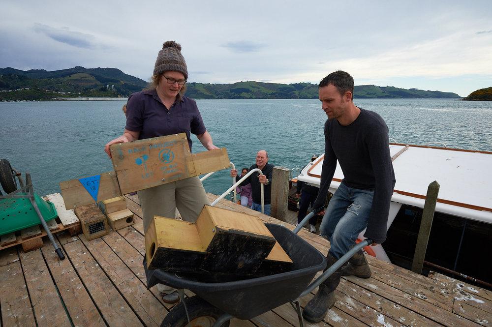 Unloading traps at Quarantine Island