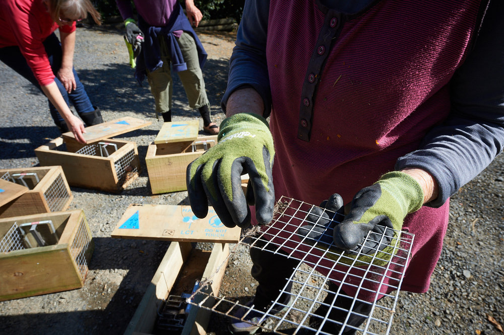 Volunteers cleaning traps