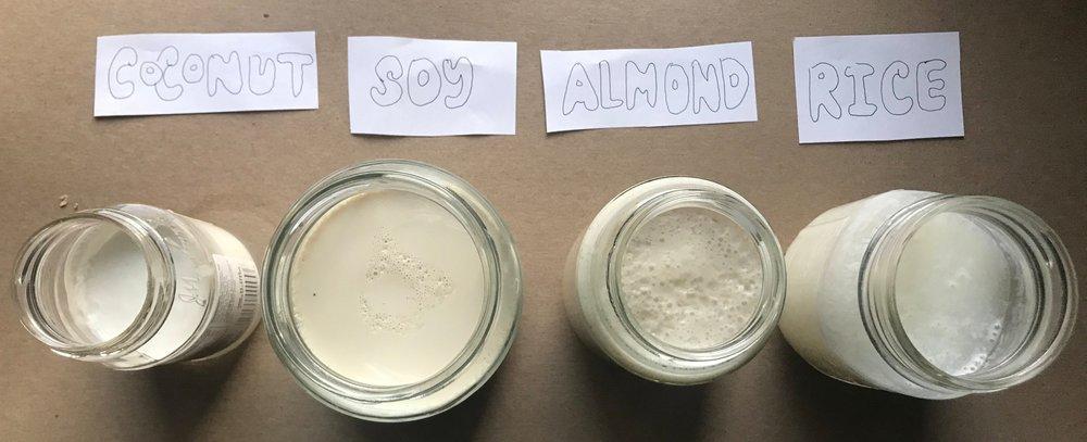 Yogurts after fermentation