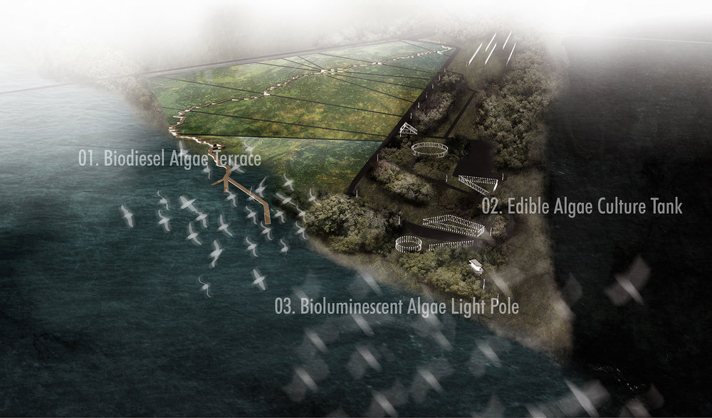 Dongzhe Tao, digital drawing of the site intervention. On the west of the site is the algae field cut by a pathway in the shape of the Mississippi River from Ft Defience to the Gulf of Mexico. On the State Park site are floating tanks that produce edible algae as well as bioluminescent algae tubes for site wayfinding.