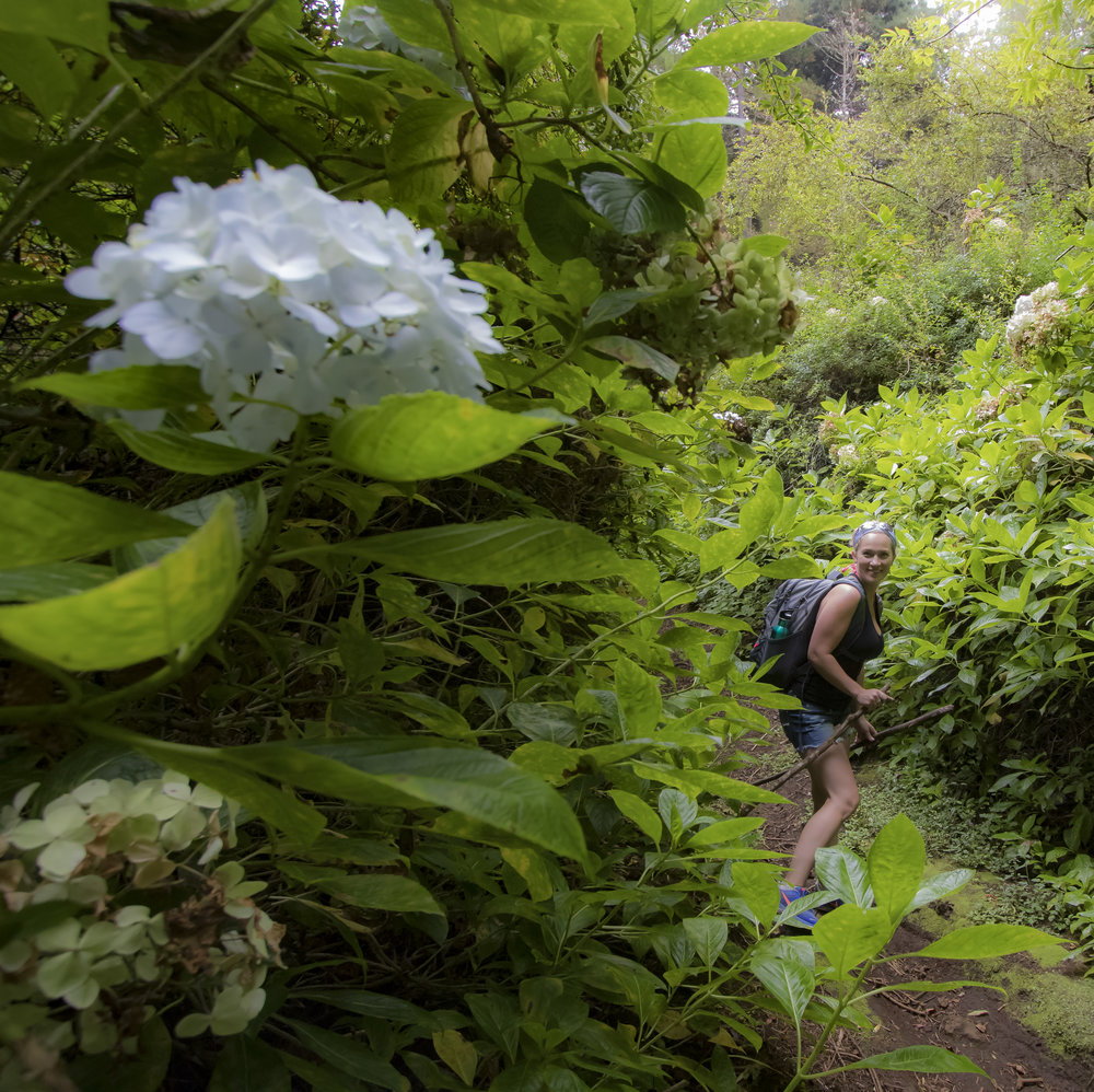 Jess in Hydrangea Field.jpg