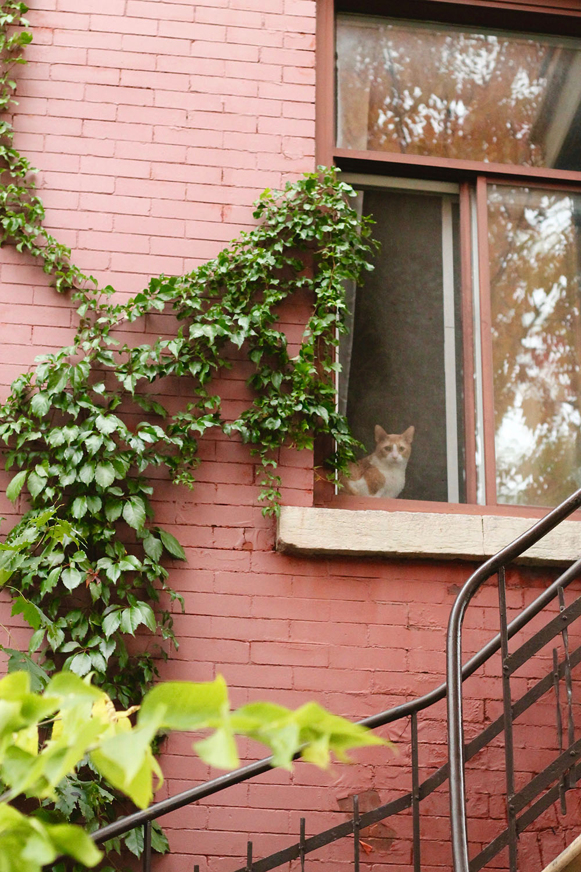 IMG_8700-Montreal-street-photography-via-5thfloorwalkup.com-by-Melina-Peterson.jpg