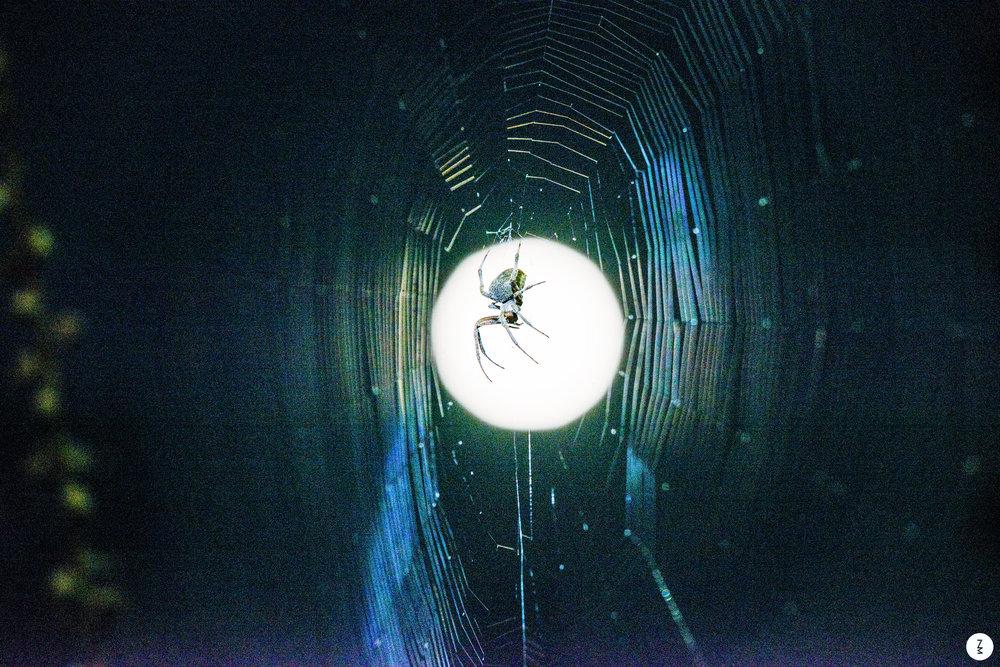 Spider Full Moon   2015