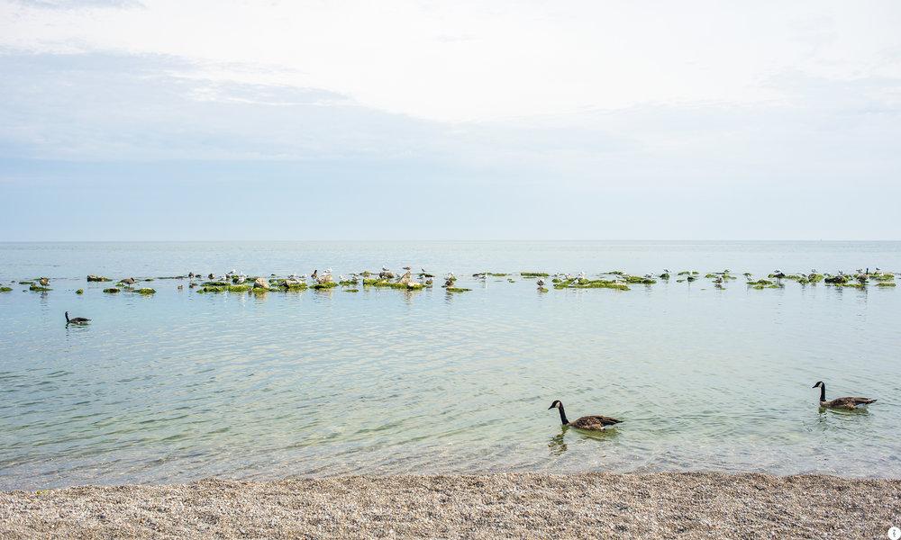 lake_DSC8933.jpg
