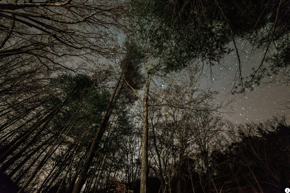 Night Trees  2018