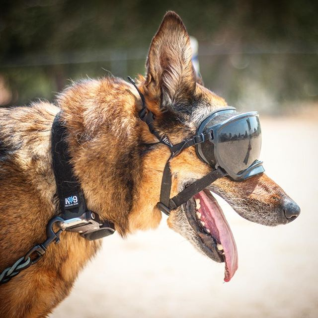 "Heading into our weekend, AKA ""bonus days"". Are you headed anywhere with your dogs or have any training goals to hit?  What's everyone want to hear about in our live streams this weekend? - - #k9tacticalgear #rexspecsk9 #malinois #workingdog #devinek9jean #thewilltobite #crusheverything"