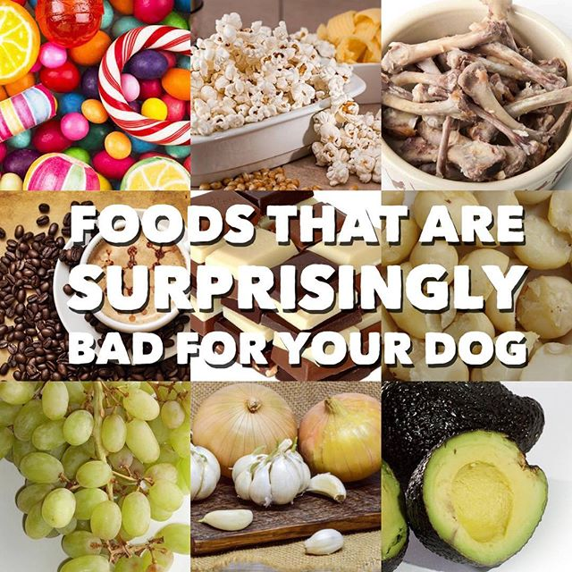 10 Things that are bad for your dog!  Some of them may surprise you. - 🍿🥨🍟 Salt/Sodium High salt intake in your dog can lead to sodium ion poisoning. Symptoms of this are vomiting, diarrhea, seizures, and tremors. - ☕️🍵🍫 Caffeine Caffeine in any form, such as coffee, tea, and chocolate, can be extremely harmful to your pets. - 🍭 🍬🍰 Xylitol A sweetener that can be found in sugar-free candies, gums, and pastries, is extremely toxic to dogs even in tiny doses. If your dog ingests any of this substance, they are likely to experience insulin spikes, seizures, low blood sugar, liver failure and even death. - 🍗🍖 cooked bones Once bones are cooked, they become brittle and are more likely to dangerously splinter. When it comes to cooked bones, the worst case scenarios are broken teeth and blockages of intestinal tracts. - 🥗 Onions While both of these foods are extremely common in human dishes, they contain disulfides and sulfoxides which cause anemia and damage red blood cells in our pups. - 🍫🍩🍪 chocolate  The dangerous substance in chocolate is called theobromine, and levels of the chemical are determined by the color of the candy – for example, the darker the chocolate, the higher the risk of death. - 🍇  grapes Even a small dose of grapes or raisins can be devastating for your dog's health. The small fruit can easily cause kidney failure and end up with your furry friend undergoing dialysis. - 🥑 Avocado  The most dangerous part of this delicious food is undoubtedly the slippery inner pit. Not only is it a choking hazard, but it is full of a chemical called persin. This substance can cause diarrhea, vomiting and heart congestion. - 🥜 Macadamia nuts It is undetermined what it is about macadamia nuts that is poisonous to dogs, but vets agree that they are indeed unhealthy. Symptoms can include depression, vomiting, weakness, joint or muscle pain, gait, swelling of joints, paralysis, and even death.  Can you guess the 10th?  And what it can cause?  What are some other things dog owners need to be aware of?  #doghealth #dogdiet #dogsafety #devinek9stips #dogtraining