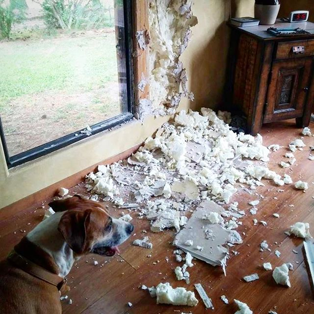 Still think crating your dog is a bad idea?  How about coming home to this?  Share your best stories of dogs with destructive behaviors. - - #baddog #cratetraining #dogtraining #dogsofinstagram #destructivedog #trainyourdog