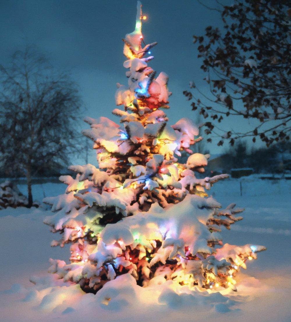 snow tree.jpg