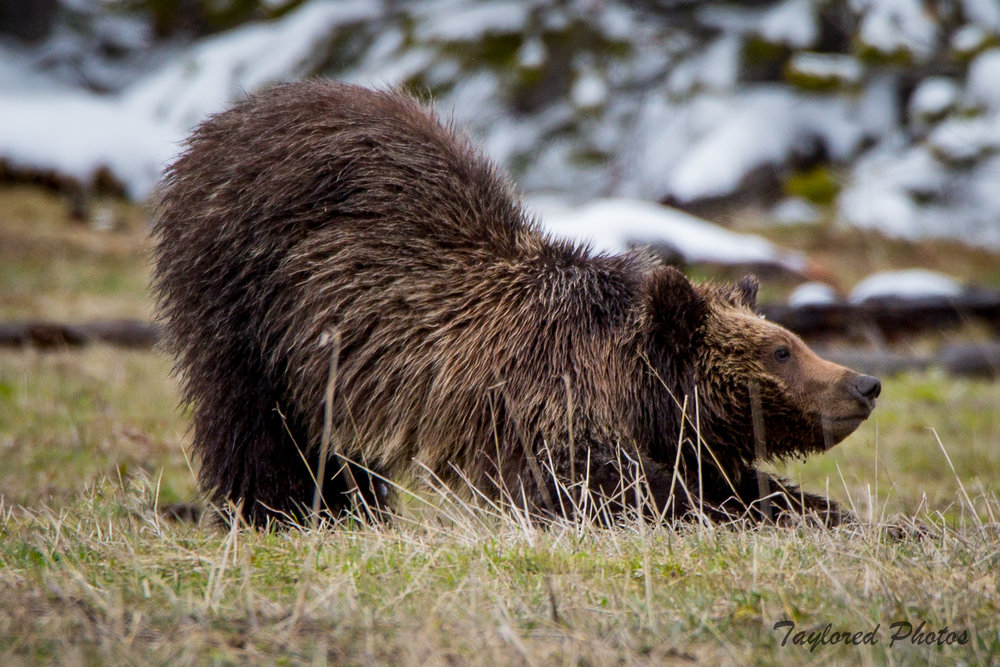 baby bear.jpg