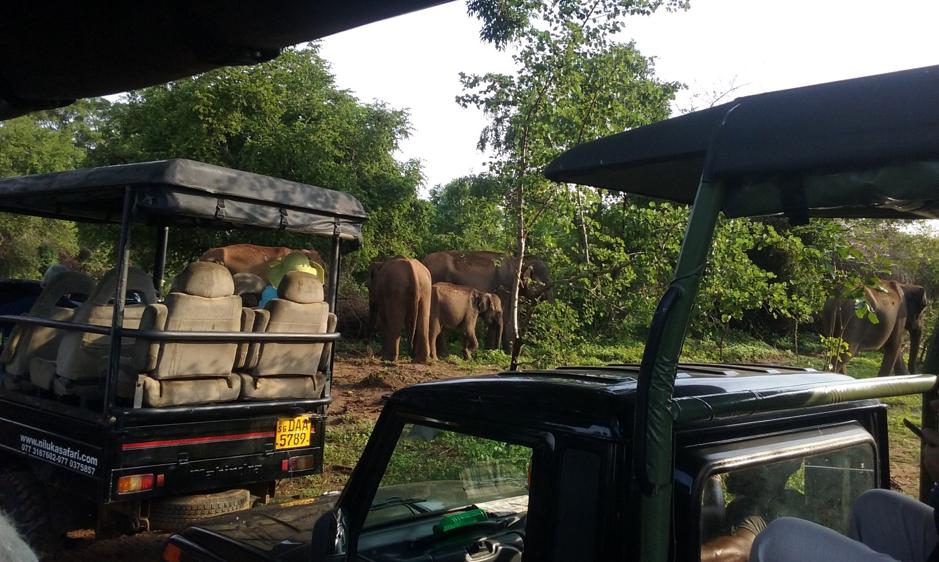 Jeep safari in the Udawalawe Park