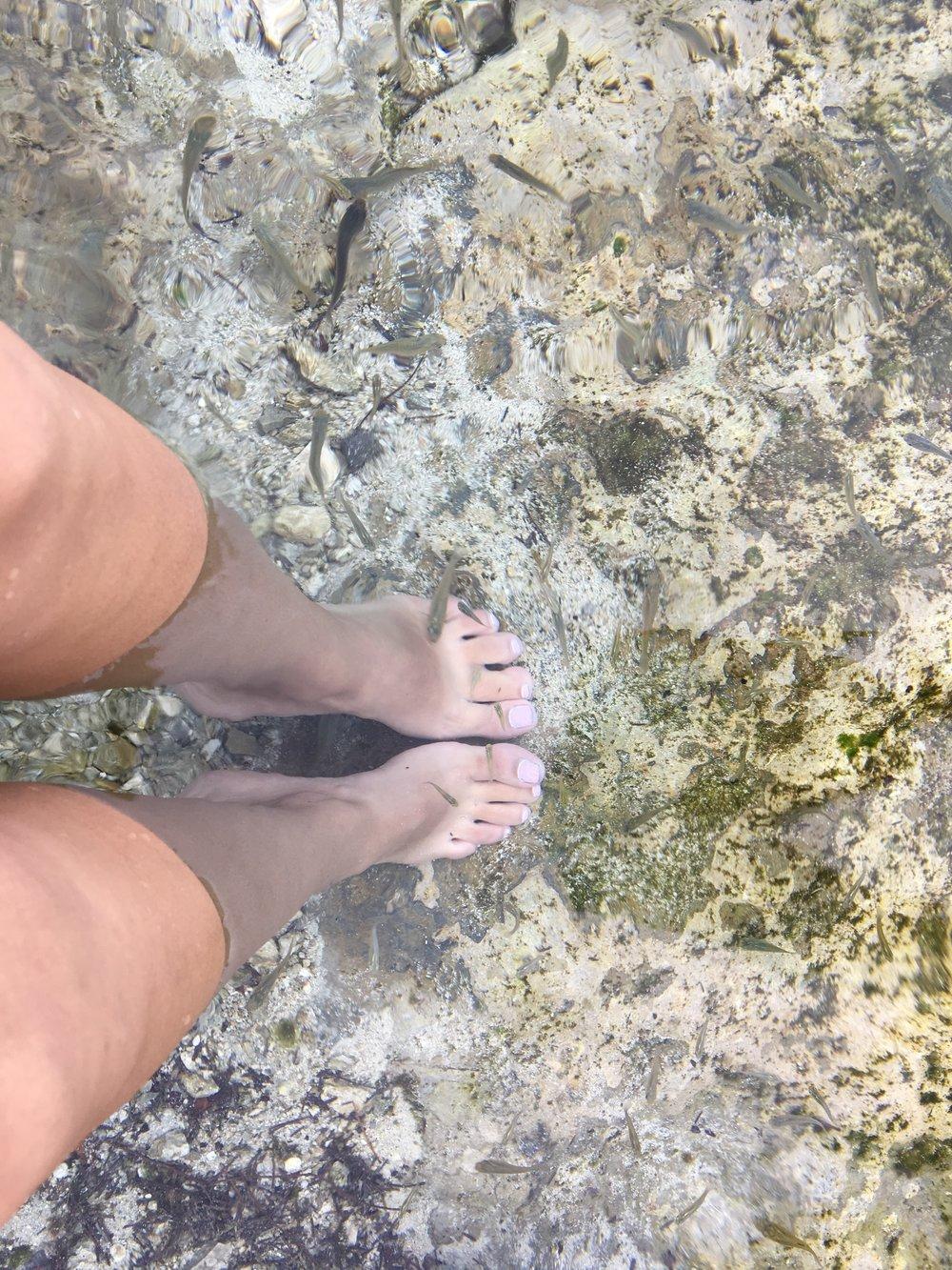 Los peces que limpiaban nuestros pies.