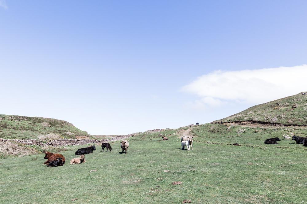 20160601 000218 - Isle of Skye.jpg
