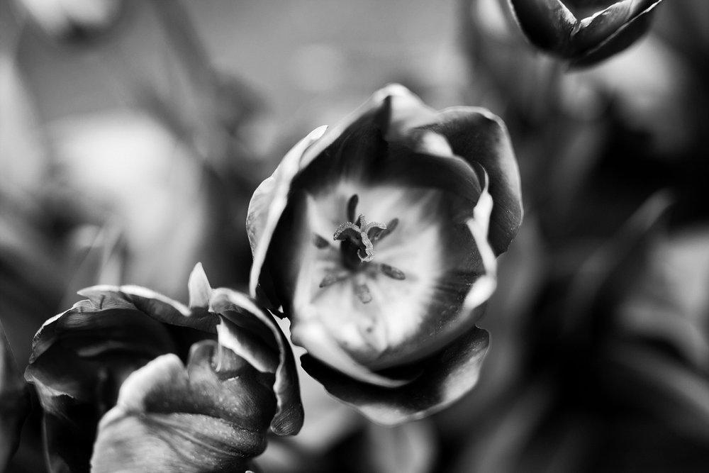 Tulip Festival Dandenong-32.jpg