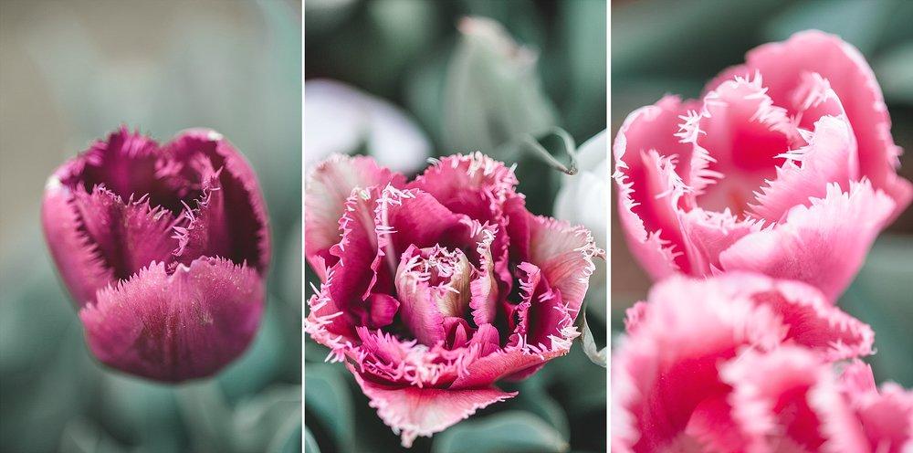 Tulip Festival Dandenong-44.jpg