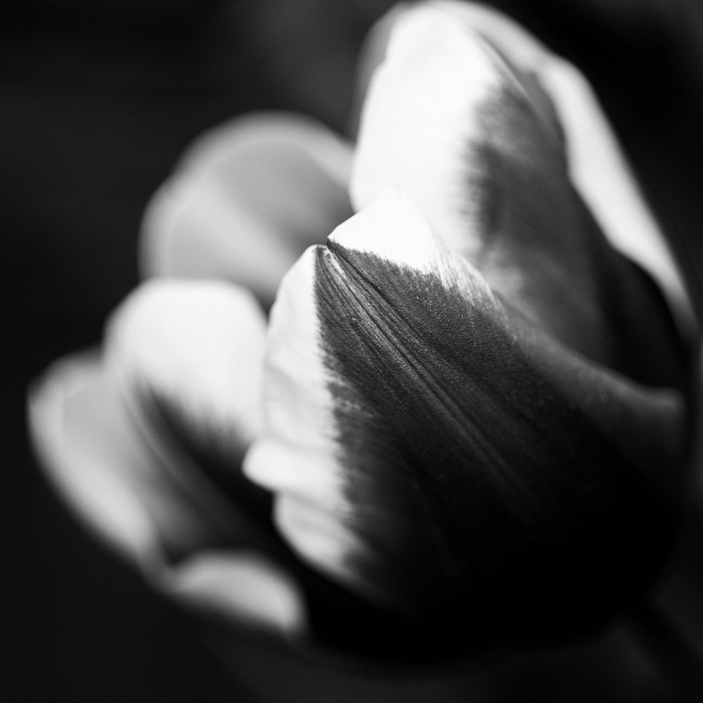 Tulip Festival Dandenong-54.jpg