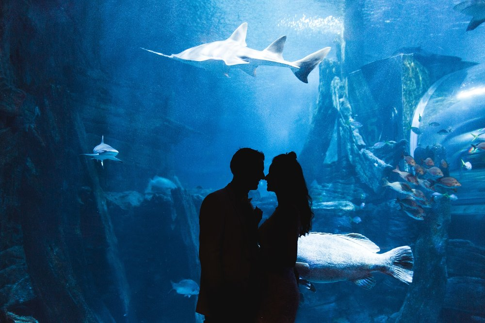 Lecinda Ward, Melbourne Wedding Photographer, Melbourne Aquarium_0273.jpg