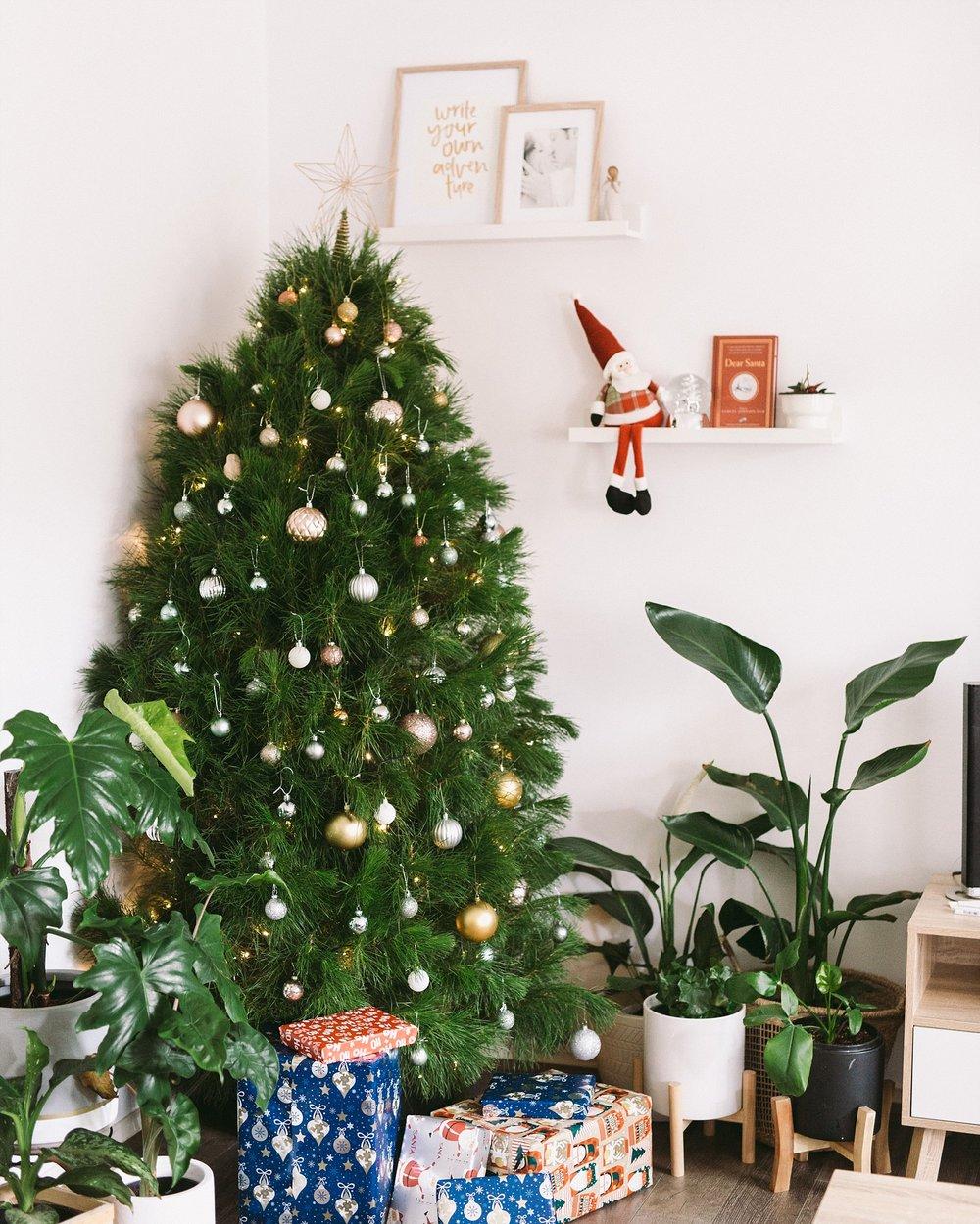 December Plant Creepers-9.jpg