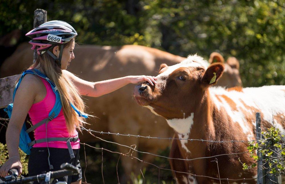 Mjølkevegen - Den nasjonale sykkelruta