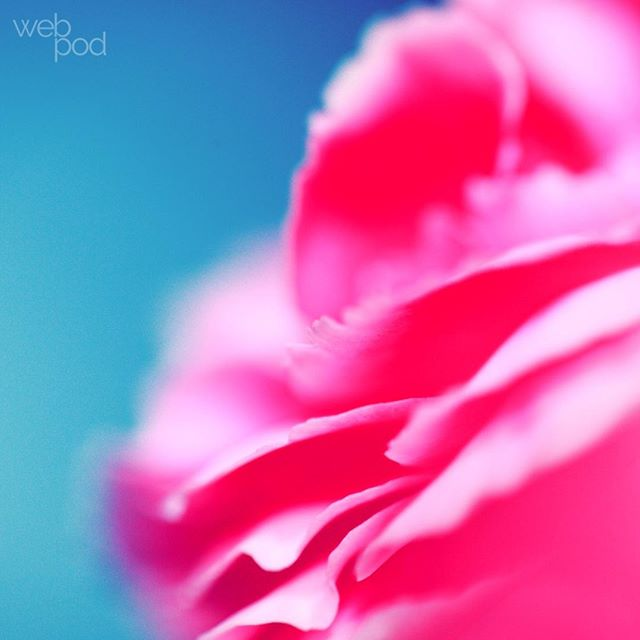 We provide the full works to help your website truly blossom 🌸  #flowers #scenery #rose #colourful #brand #websitedesign #website #squarespace #squarespacedesign #bold #creative #welcome #branding #business #socialmedia #colour #marketing #entrepreneur