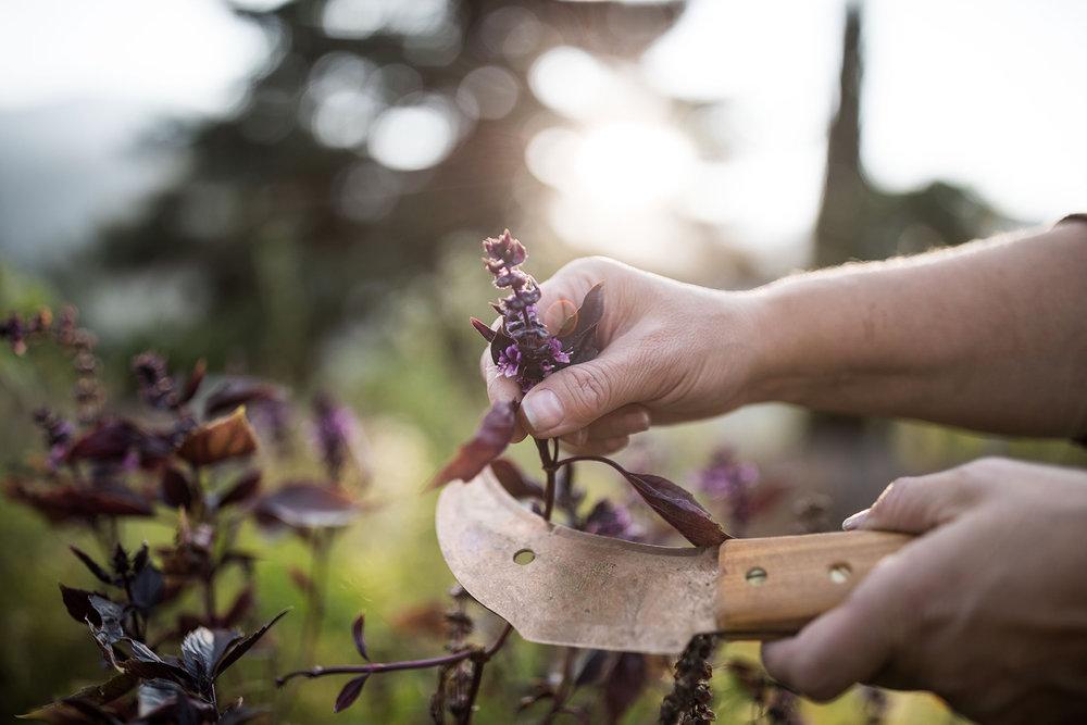 Akademie - Gartenführungen / Erlebnisvorträge / Workshops