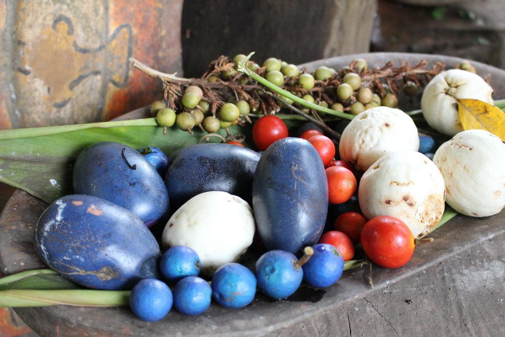 frutas del bosque tropical