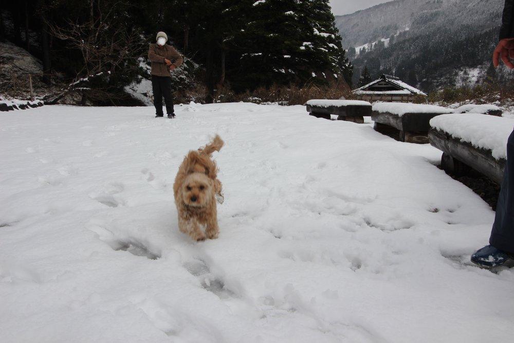 Gokayama en la nieve