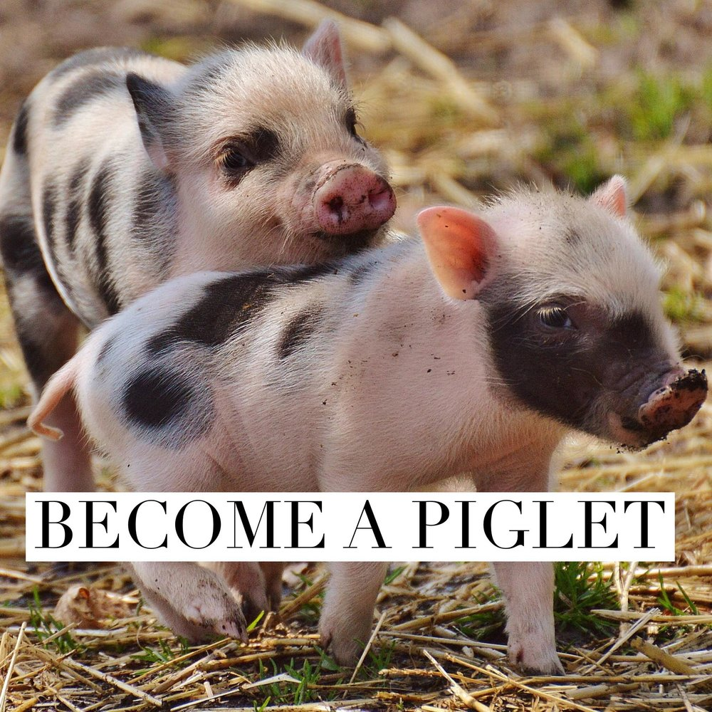 Button: Become a Piglet Image: 2 baby pigs playing