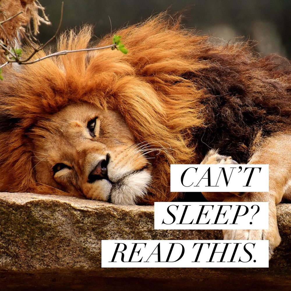 Button: Can't sleep? Read this. Image of sleeping lion