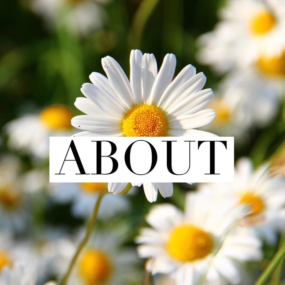 Button: About Image: Daisy