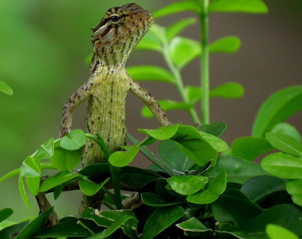 My-lizard-brain-causes-resistance