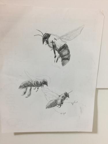 sketch_bee12_l.jpg