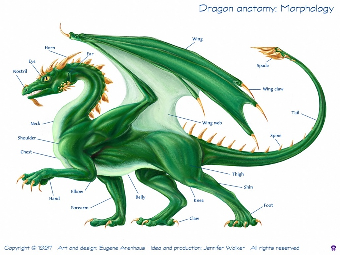 dragon anatomy