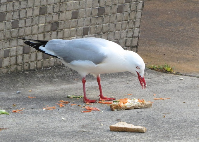 seagull no-snacking