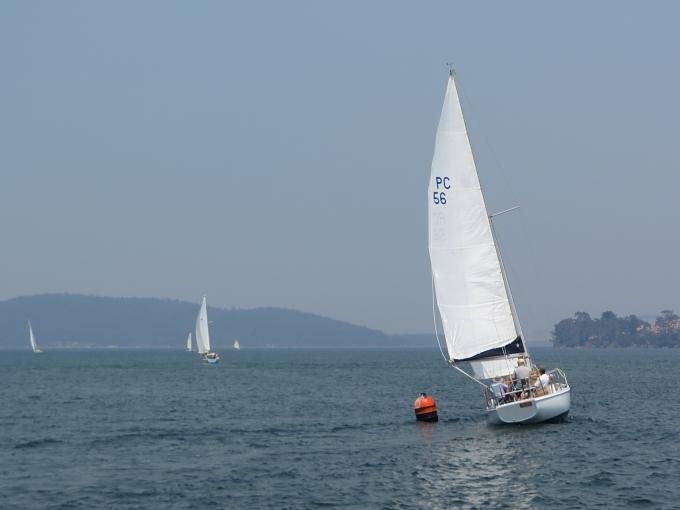 cygnet boat races