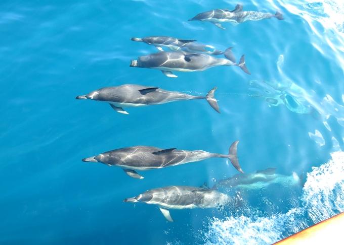 dolphin ballete