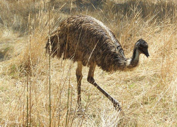portland discovery coast emu1