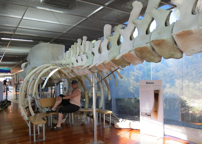 portland victoria maritime discovery museum whale skeleton mc