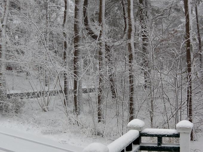 blizzard_woods