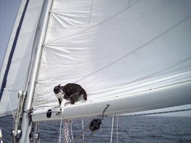jelly sail trim