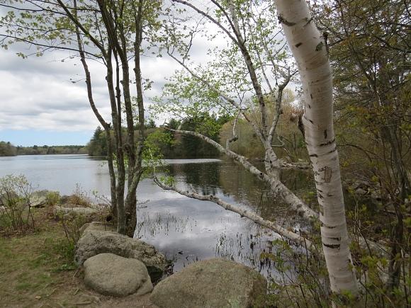 leach pond