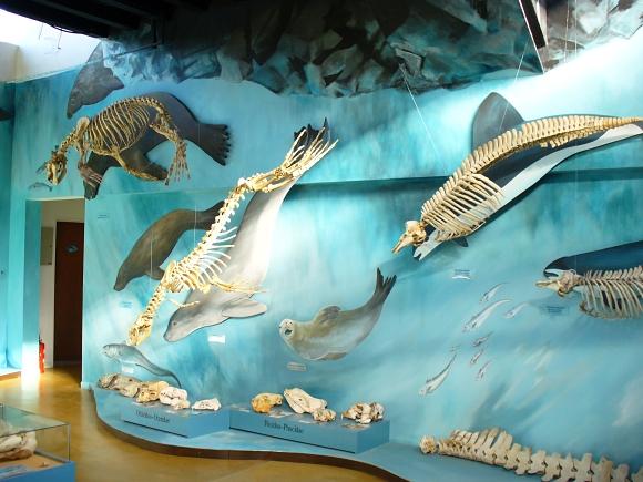 harberton museum in ushuaia