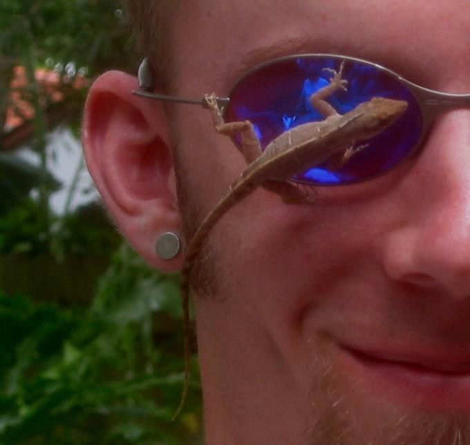 lizard on sunglasses